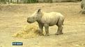 Dublin Zoo welcomes new male southern white rhinoceros