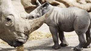 An as-yet unnamed baby rhino born this week at Dublin Zoo