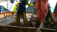 UN criticises Govt's scheme for fishermen outside EEA