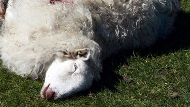 The animals were killed near the Wicklow Way (Pic: Shyne Phelan) (Warning: Next image is more graphic)