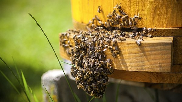 """""""Hives can be a hub for pests, such as the Varroa mite, and diseases like deformed wing virus (DWV)"""""""