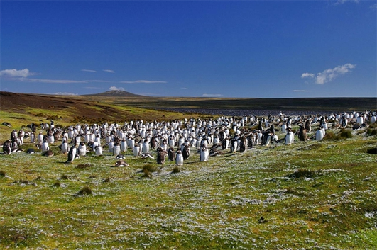 Wildlife In The Falklands