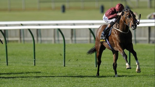 Havana Gold should time his run better at the Curragh in his quest to land the 2000 Guineas