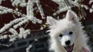 New laws will introduce mandatory dog chipping by 2015