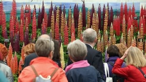 Visitors admire the plants on display in The Great Pavilion at the RHS Chelsea Flower Show