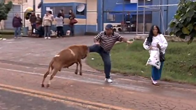 In the video a goat attacks a woman as a man tries unsuccessfully to defend her