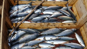 EU fisheries ministers want a 5% exemption on discards