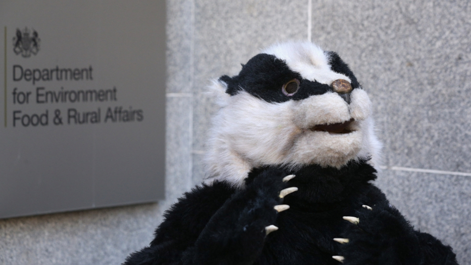 A campaigner in a badger costume looks on during a protest against the British Government's proposed badger cull