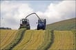 More Silage