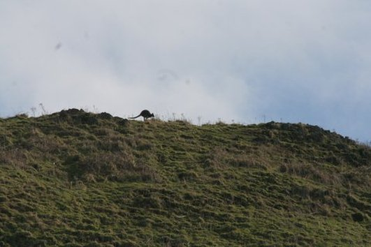 Lions in Fairview and wallabies on Lambay Island