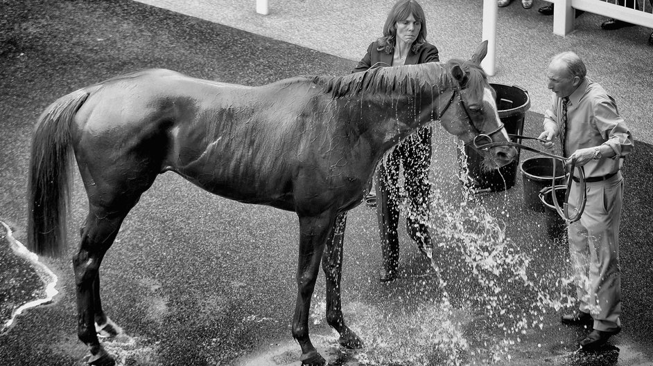 A horse is washed down after a race during Royal Ascot
