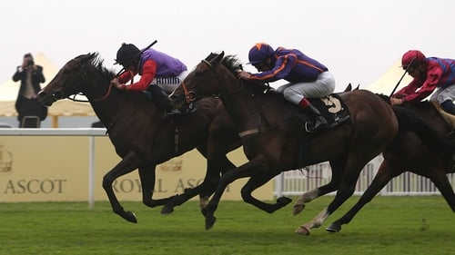 Estimate and Ryan Moore (furthest from camera) on their way to winning the 2013 Ascot Gold Cup