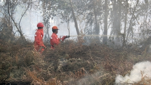 Indonesian firefighters battle forest fires in Pekanbaru that are leading to the haze