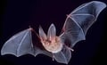 Batman Theme Tune Performed By Actaul Bats.