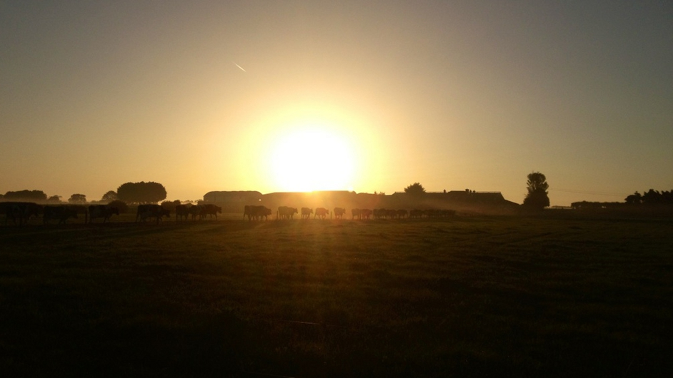 Milking time. Sunrise on Denis Cody's farm in Co Tipperary. Photo: Carmel Daly