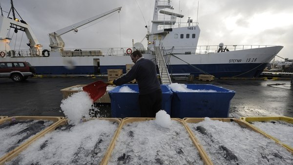 Iceland has significantly increased its mackerel catch from the northeast Atlantic in the past seven years
