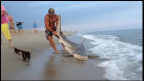 Elliot Sudal managed to reel in the shark and wrestle it to the beach