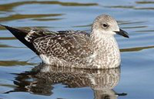 DSPCA Inundated With Calls About Seabirds Not Fledging