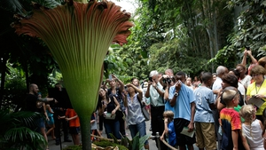 Visitors to the US Botanic Garden in Washington admire the sight (and smell) of the 'corpse flower'