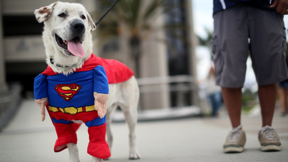 Beckham the Superdog gets into the swing of things at Comic Con in San Diego, California
