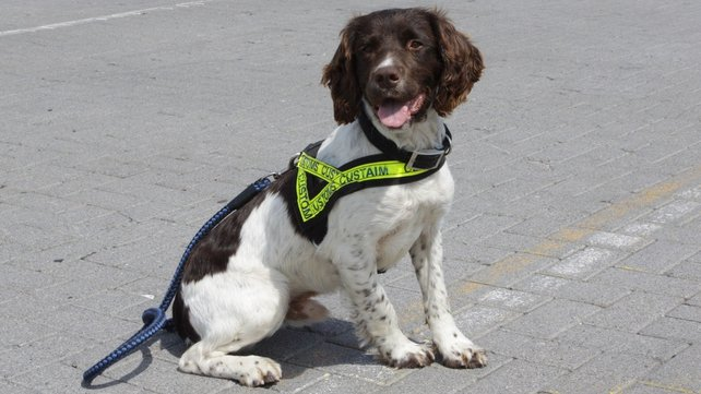 Customs Sniffer dog, Ralph detected the drugs in the vehicle