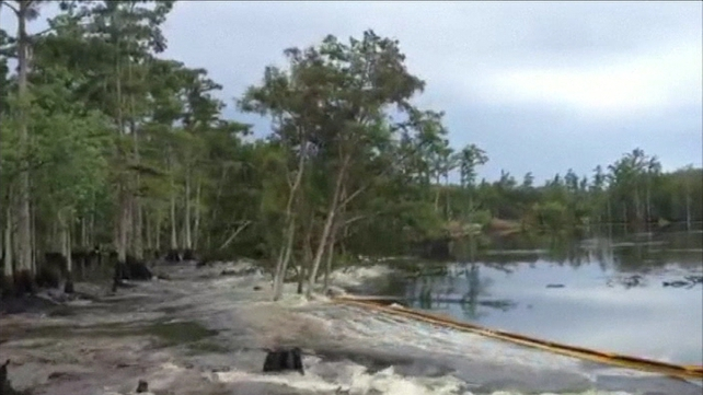 The footage shows the sinkhole swallowing trees and land on the edge of the swamp