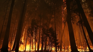 Trees are consumed in the fire