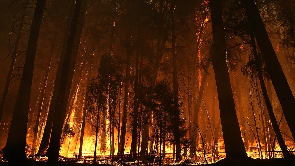 Trees are consumed in the wildfire in Yosemite National Park in California