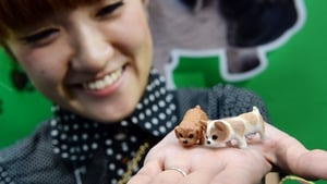 An employee of Takara Tomy displays small toy dogs, 'Jare-inu,' or frolic dog, at the Tokyo International gift show