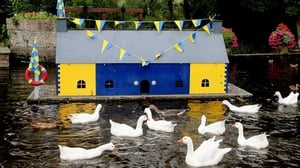 Clare fans made a special home for the birds ahead of the All-Ireland hurling final