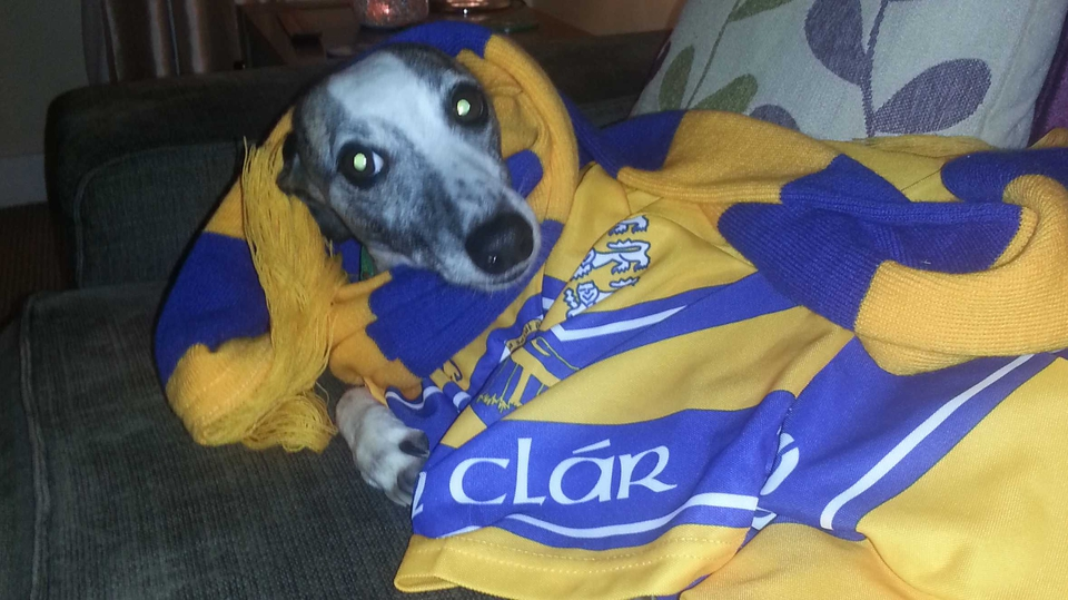 Molly the whippet backing the Banner all the way from Glasgow