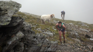 Fell runners approach the summit of Snowden as they compete in the 'Peris Horseshoe Race' in Wales