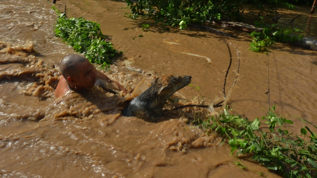 A man rescues a dog from a swollen river following Hurricane Manuel in Navolato, Sinaloa State