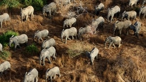 Zimbabwean ivory poachers have killed over 80 elephants by poisoning water holes with cyanide