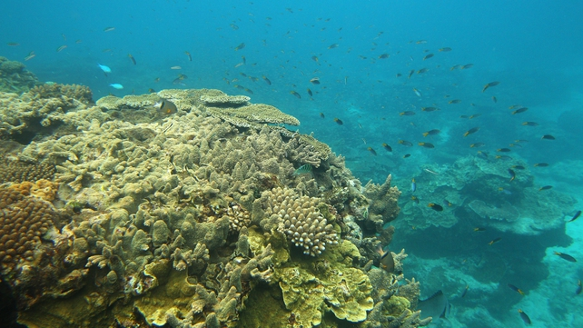 Corals, such as this one off Lady Elliot Island in Australia, could be at risk