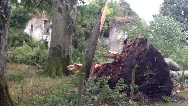Dozens of trees were uprooted and broken in the storm