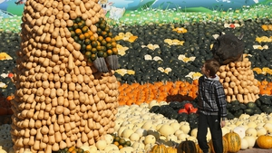 A young boy walks past a display decorated entirely with pumpkins and squash at the Spargelhof Buschmann & Winkelmann farm in Klaistow, Germany