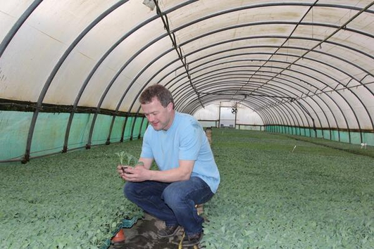 Broccoli Grower Paul Brophy