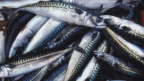25% of Ireland's mackerel exports are sold to Russia