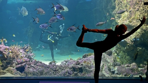 Yoga by the Sea founder Sasha Hawley (C, underwater), relays her moves to fellow yoga instructor Vivien Speers during a yoga class at the SEA LIFE Sydney Aquarium's Great Barrier Reef Oceanarium