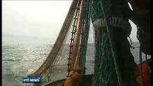 Ireland opposes EC mackerel fishing plans