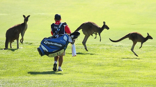 Peter Lawrie's caddy avoids the moving hazards at the Lake Karrinyup course