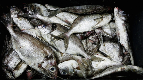 Original Commission proposal was for a 75% reduction in some fish quotas