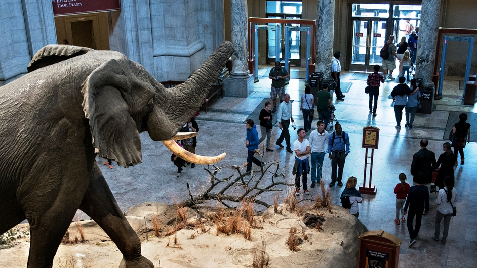 People visit the Smithsonian Natural History Museum on the National Mall, Washington