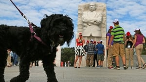 A dog pulls its owner past the Martin Luther King Memorial in Washington