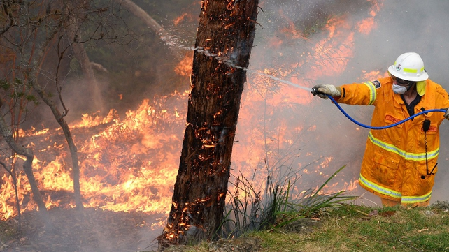 A firefighter hoses a tree as he works to contain fires from a resident's backyard at Faulconbridge