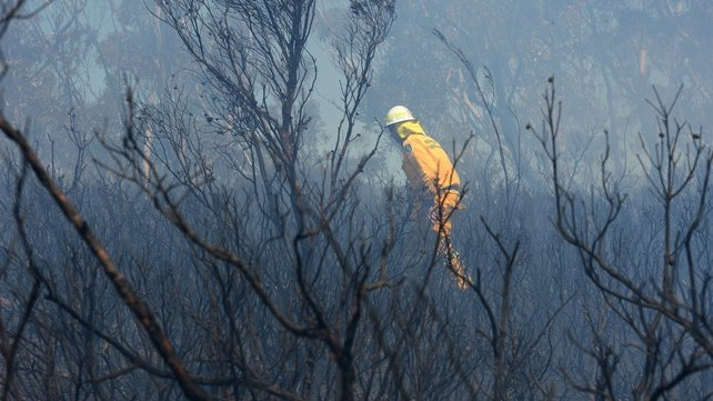 A firefighter struggles through scorched bushland