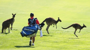 The caddy of Peter Lawrie walks amongst kangaroo's on the sixth fairway during day one of the Perth International