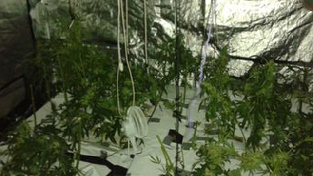 Garda photo from inside house in Drogheda where cannabis cultivation operation discovered