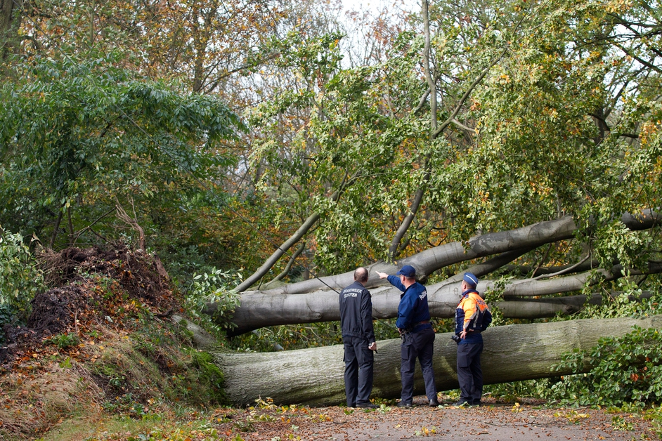 Hurricane-force gusts knocked down trees in forests across Europe
